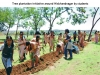 Tree Plantation Initiative